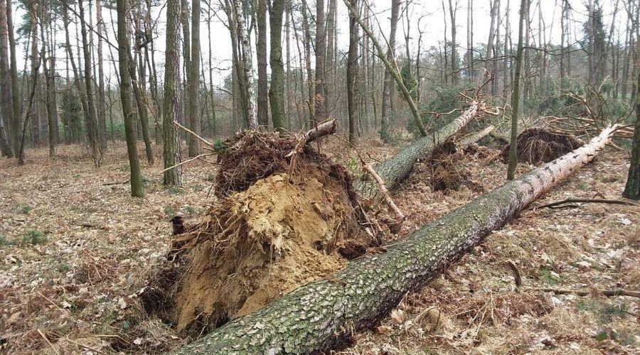 W Lasach Nadal Niebezpiecznie