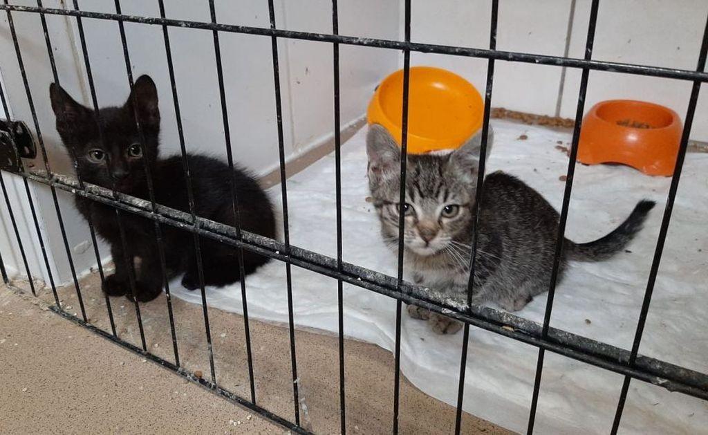 Dramatyczny Apel O Pomoc. Fundacja Nie Jest Już W Stanie Pomóc Większej Liczbie Kotów