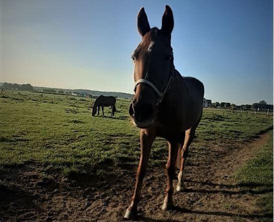 Konie Uciekły Na Drogę