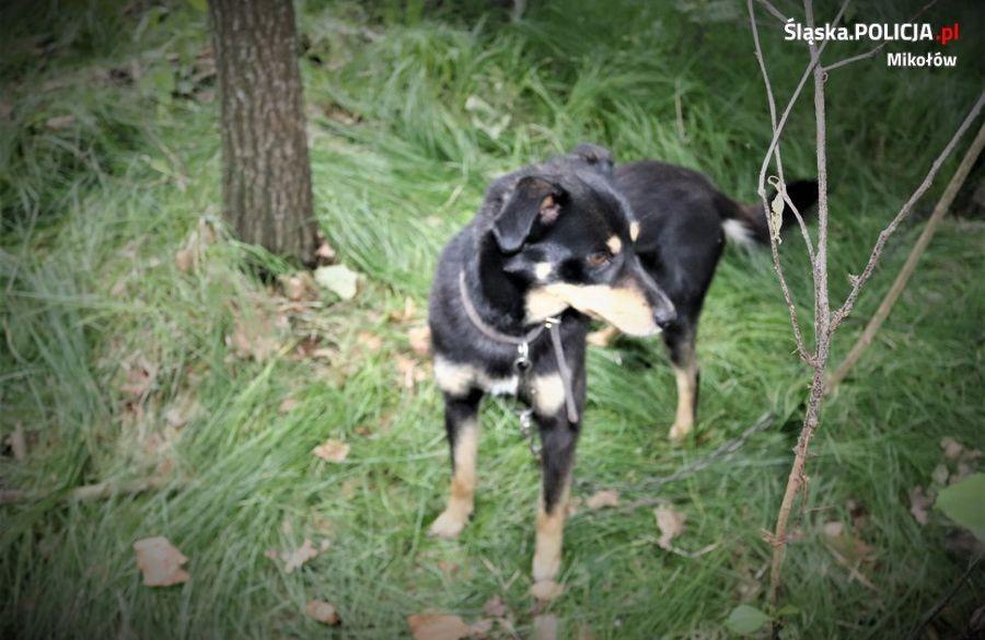Kto Zostawił Psa Uwiązanego W Lesie?