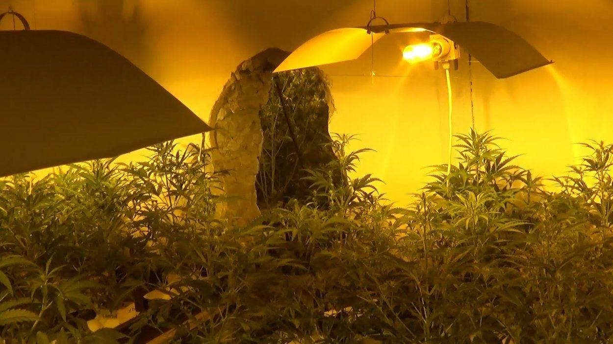 Poczuli Marihuanę Zanim Wyważyli Drzwi